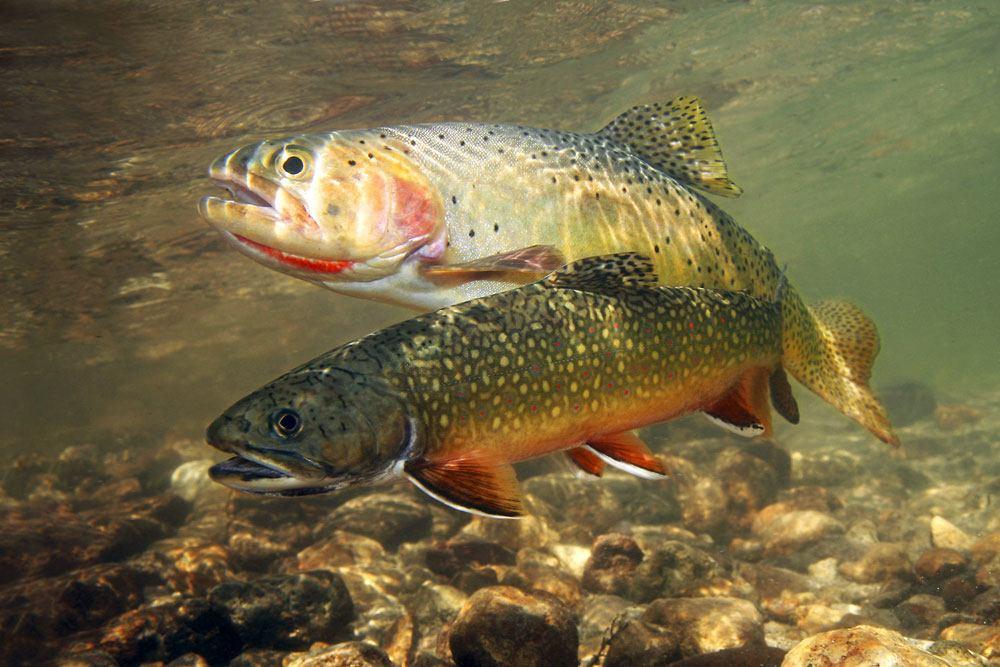 Best trout bait