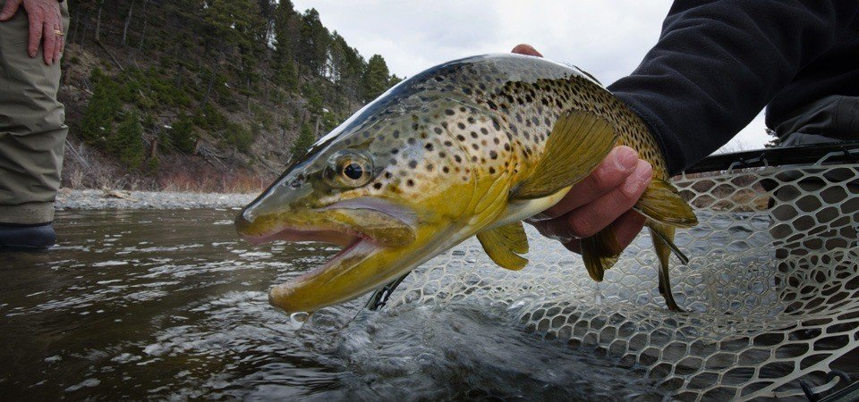 Best trout lures for rivers and streams our top 10 picks for Best lures for river fishing