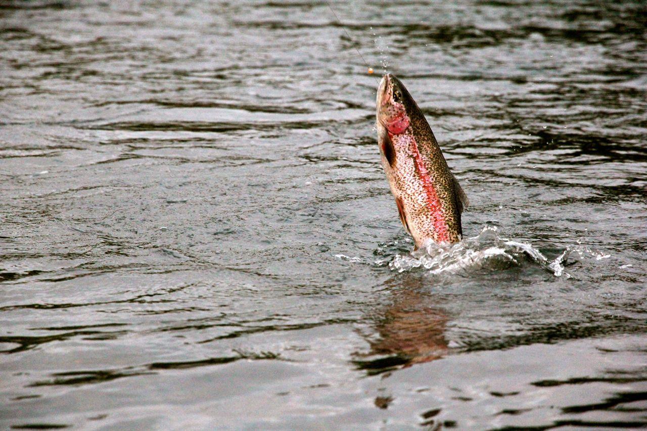best trout hooks