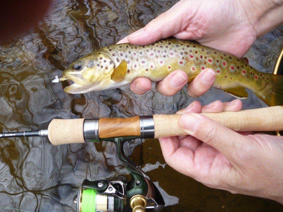 trout fishing setup