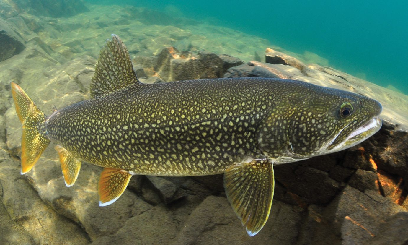 Lake Trout Fishing Tips Best Trout Lures
