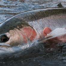 best steelhead bait